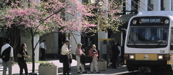 zeeflow-cherry-blossom-bus