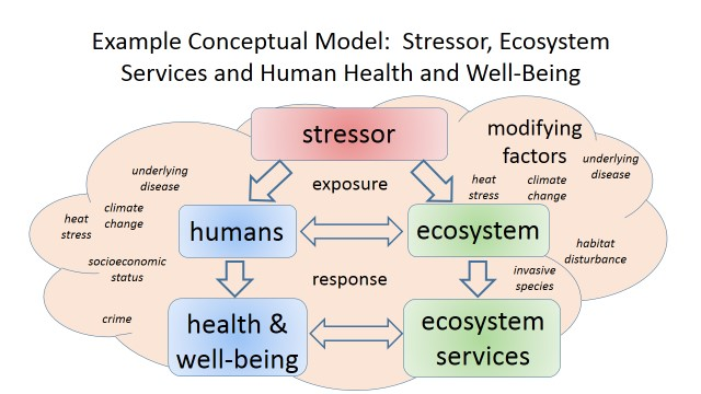 Ecosystem And Health