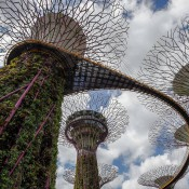 As part of Singapore's efforts to maximize scarce resources, these Supertree sculptures in a park collect rainwater. PHOTO: JOHN S. LANDER/GETTY IMAGES
