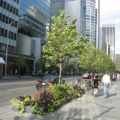 Trees-in-city-300x225