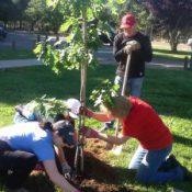 (Photo: Sacramento Tree Foundation)