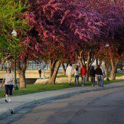 Albert Lea, Minnesota, is a walkable rural community (Courtesy of Blue Zones)