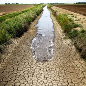 A dried-up ditch between rice farms in Richvale, California (AP Photo/Jae C. Hong, File)