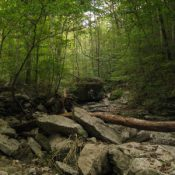 Sherwood Forest (Source: Tennessee Division of Natural Areas)