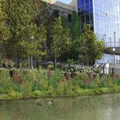 Rendering of Urban Rivers' Chicago River floating wetland project (Credit: Urban Rivers)