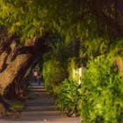 Street trees in Miami Beach (Credit: Steve Mouzon)