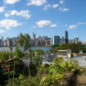 Rooftop Farm in Brooklyn, NY (Credit: Rositsa Ilieva)