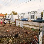 Orchard Park Urban Farm Project, the community garden and chicken coop across from Shotgun Row (Credit: Aaron M. Conway)