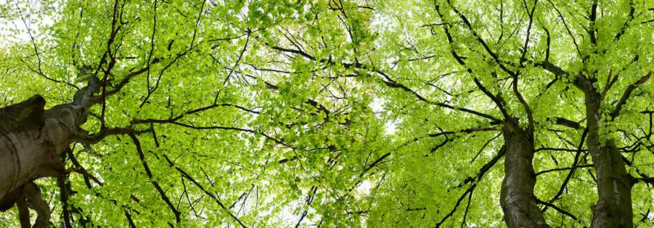 tree_canopy